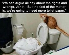 All About Cats And The Precious Toilet Paper These Days (Cat Memes) - World's largest collection of cat memes and other animals Funny Animal Memes, Cute Funny Animals, Funny Cute, Funny Dogs, Cute Cats, Funny Kitties, Animal Funnies, Funny Horses, Adorable Kittens
