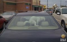 Leaving your dog in the car-FAIL