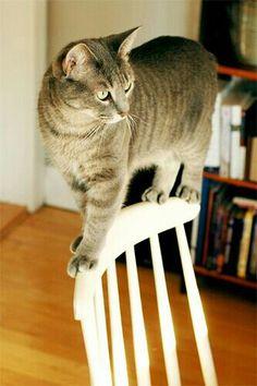 Balanced cat