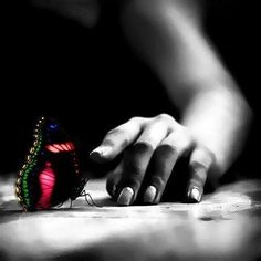 a ƈ ᵒ ᴸ ᵒ ᴿ splash Butterfly Effect, Red Butterfly, Butterfly Kisses, Color Splash, Color Pop, Black N White, Beautiful Butterflies, Color Photography, Black And White Photography
