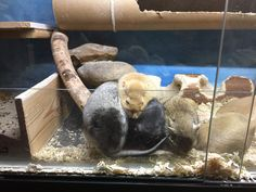 Degu, Gerbil, Aquarium, Goldfish Bowl, Fish Tank, Aquarius
