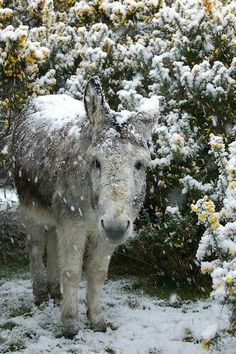 Winter and Cute Donkey Farm Animals, Animals And Pets, Cute Animals, Wild Animals, Animals In Snow, Beautiful Horses, Animals Beautiful, Cute Donkey, Baby Donkey