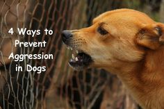 Aggressive Dog Training - Instructions To Help You Train Your Dog Properly -- Click image to read more details. Happy Campers, Dog Growling, Stop Dog Barking, Dog Attack, Aggressive Dog, Cat Behavior, Dog Training Tips, Dog Owners, Rage