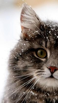 So cute with the snow flakes on its head..