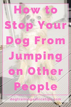 How to Stop Your Dog From Jumping on Other People - Dog Training Advice Tips Pet Dogs, Dog Cat, Doggies, Diy Dog Toys, Puppies Tips, Cute Animal Photos, Healthy Pets, Puppy Care, Girl And Dog