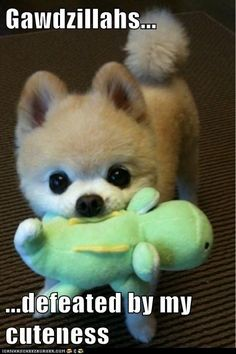 I swear for a split second I thought that dog was a stuffed animal... #cutie