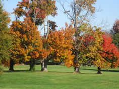 Autumn - Amazing autumn colors at the grove in Owensboro Community and Technical College (OCTC)