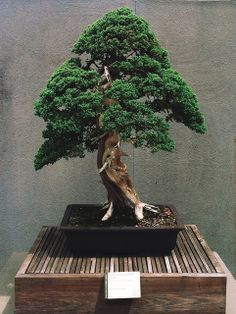 National Bonsai and Penjing Museum, National Arboretum | Flickr - Photo Sharing!