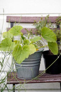 Flashback - de tuin begin juli