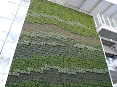 Living wall at the Vancouver International Airport using GSky Plant Systems designed by Sharp Diamond Landscape Architecture Airport Architecture, Landscape Architecture, Landscape Design, Vertical Garden Design, Vertical Gardens, Green Facade, Rain Garden, Garden Living, Interior Garden
