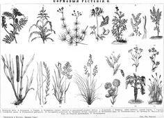 луговые травы фото с названиями