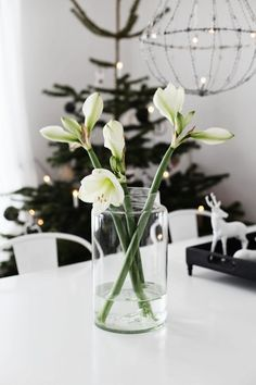 white amaryllis - the most beautiful of all christmas flowers Noel Christmas, Scandinavian Christmas, Winter Christmas, Decoration Christmas, Holiday Decor, Amaryllis, Christmas Interiors, Deco Floral, Christmas Flowers