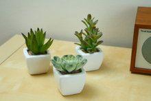 Ventajas de decorar la casa con plantas artificiales - Plantas ikea naturales ...