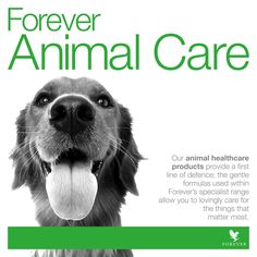 Treat that love of your life to a little loving care. #FLP http://link.flp.social/tJgFln #foreveranimals