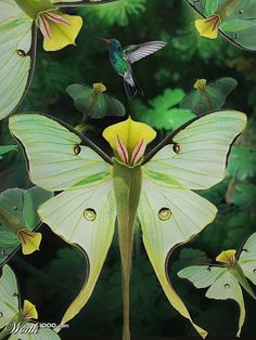 The pitcher plant - looks like a butterfly! Love the little humming bird in the back ground