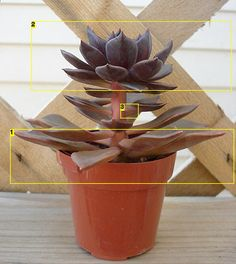 How to propagate succulent leafs! Amazing! I can't wait to try this since I'm obsessed with these already!