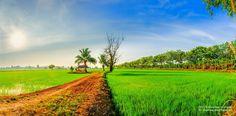 Untitled - My Panorama photo cornfield