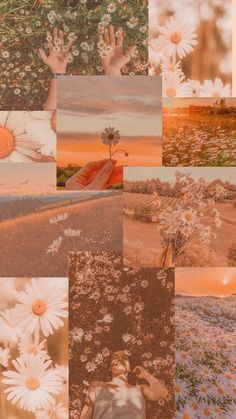 🌼daisies wallpaper collage🌼