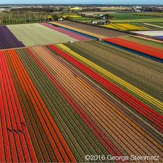 Photograph by George Steinmetz @geosteinmetz / @thephotosociety Tulip season is peaking in The Netherlands this week. The Dutch are amazing gardeners and are the second largest exporter of agricultural products in the world after the United States. Its