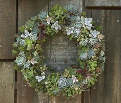 succulent wreath by Flora Grubb succulent favors by project wedding discovered via Camilla succulent container gardening by Jay and Mary at. Diy Wreath, Door Wreaths, Wreath Making, Succulent Wreath, Succulent Ideas, Flora Grubb, How To Make Wreaths, Holiday Wreaths, Garden Pots