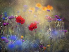 ***Monet's Garden (Giverny, France) by Magda Bognar Monet, Canvas Art, Canvas Prints, Art Prints, Flower Art, Wild Flowers, Meadow Flowers, Flowers Garden, Spring Flowers