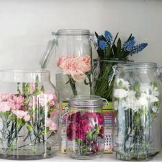 Des oeillets ont été placés dans des bocaux en verre transparents comme une collection issue d'un cabinet de curiosité