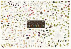 De verschillende soorten groenten Poster 39 x 27 Print