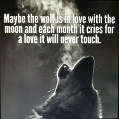 Discover and share Awesome Wolf Quotes. Explore our collection of motivational and famous quotes by authors you know and love. Lone Wolf Quotes, Moon Quotes, Life Quotes, Wolf Qoutes, Deep Quotes, Heart Quotes, Quotes Quotes, You Are My Moon, Wolf Spirit Animal