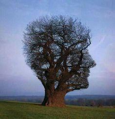 необычные деревья...