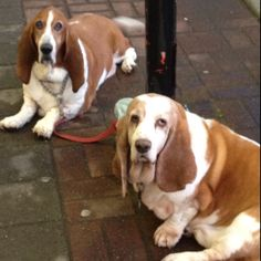 Spotted these two dogs outside the grocery store. So much character :) I feel like I should name them...
