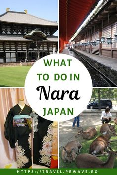 Things to do in Nara, Japan - the forgotten capital Japan Travel Guide, Travel Guides, China Travel, Travel Usa, Beautiful Places To Visit, Cool Places To Visit, Pvt Japon, Kyoto, Australia Travel