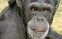 <p>Meet these four amazing animals that broke free from captivity, some more than once! </p>