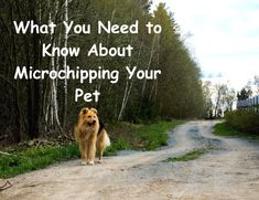 What You Need to Know About Microchipping Your Pet #safety #petcare #microchip Animal Projects, Pet Care, Need To Know, Safety, Pets, Animals, Security Guard, Animales, Animaux