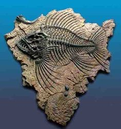 Fish Fossil | #Geology #GeologyPage #Fossil  Geology Page www.geologypage.com