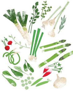 veggie illustration
