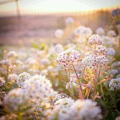 flower field at Fields