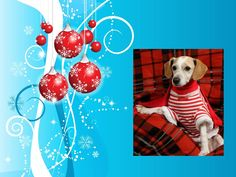Christmas dog (created for use in Power Point presentation in clinic lobby while throwing in educational content for clients)