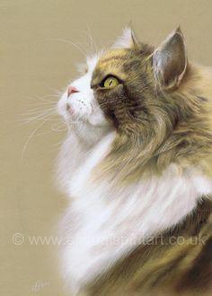 christina schulte artist cats - Google zoeken