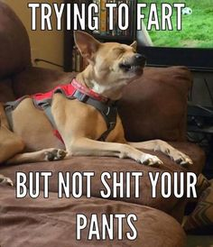 Funny, Memes, Pictures: funny-animals-61