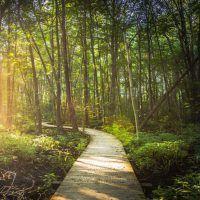 My Journey to Reiki. Why I chose Reiki and how it helped change my life. Change My Life, Reiki, Sidewalk, Country Roads, Journey, Blog, Side Walkway, Walkway, The Journey