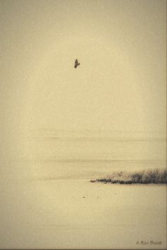 A bird of prey above the Wad ...