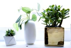 The planters throughout the space are from The Sill.