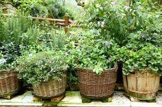 basket and barrel pots