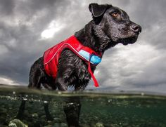 Let your dogs get to enjoy a water ride in a safe and comfortable way with EzyDog.