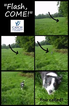 Can your dog do this?  http://www.catchdogtrainers.com/