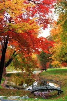 Fall Foliage in Westchester County, New York. Fall Pictures, Nature Pictures, Beautiful Landscapes, Beautiful Pictures, Autumn Scenes, Pintura Country, Autumn Garden, Westchester County, Fall Halloween