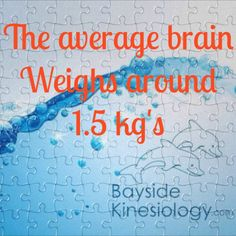 The average brain weighs around 1.5Kgs Thats almost a bottle of milk.   Pretty heavy thing to be inside your head all day, every day
