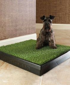 This indoor pet toilet area takes the worry out of not being there to take your pet outside to go potty.