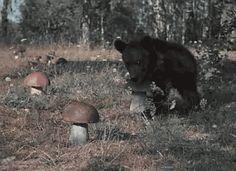 Bear grabbing a mushroom .GIF