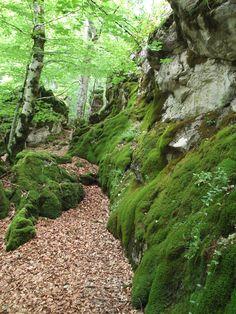 Parque Natural de Urbasa y Andia. Senderismo por el hayedo encantado en primavera.